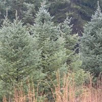 Boyles Evergreen Tree Farm