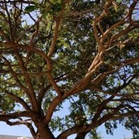 A Tree Surgeon Tree Services