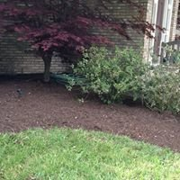 Hernandez landscaping and tree services