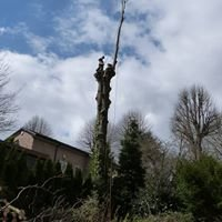 RSH Tree Services