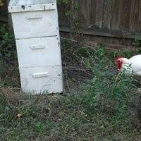 Heritage Honey Farms