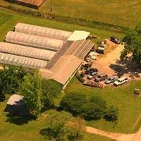 Stromgren Greenhouse