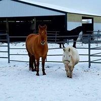 Full Circle Equine Rehabilitation Center