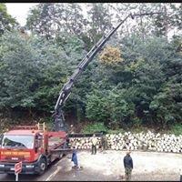 M Large Tree Services Ltd