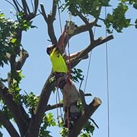 Shaynes Tree Services
