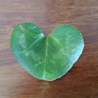 Nutribotanica : Jacqui Bulleid : Naturopath