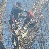 Tree Slayer Services