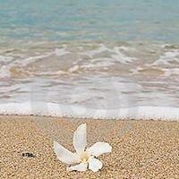 Aqua Pacifica Australia