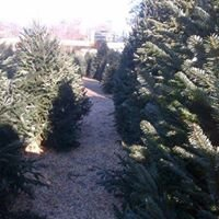 Willie Simpsons Christmas Tree Lot