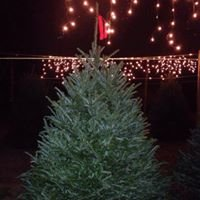 Family Christmas Trees