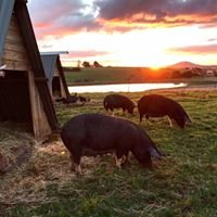 Brooklands Free Range Farms Blampied Central Highlands Vic