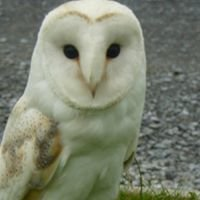 Munster Falconry Services
