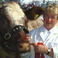 Redhill Pedigree Livestock  - Beef Shorthorn Cattle & Poll Dorset Sheep