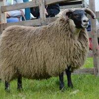 Netherwood Farm Livestock
