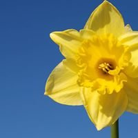 Rathdrum Cancer Support Group - Registered Charity Number 20142445