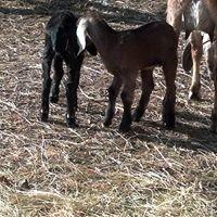 Trembling Goat Farm