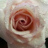Amazing Creations Florist