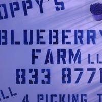 Poppy's Blueberry Farm