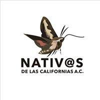 Nativ@s