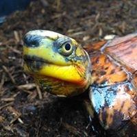 CBC Turtles and Tortoises