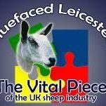 Bluefaced Leicester Sheep Breeders' Association
